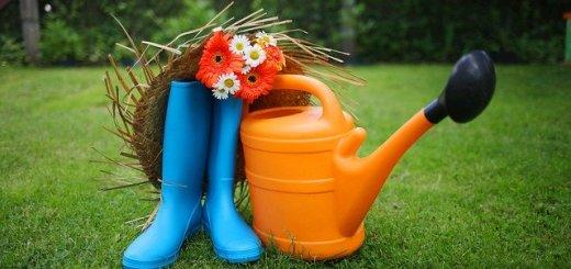 garden-3276321_640
