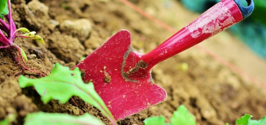 gardening-2448134_1280